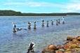 Pelicans on Pilings