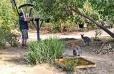 Red-necked Wallabies watch Rod fill the bird feeder