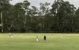 Ollie's Cricket Match
