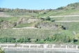 Vertical vineyards