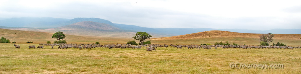 Zebras & Wildebeest