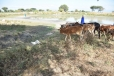 Waterhole for cattle, goats & people