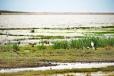 Sacred Ibis, Flamingos & Egyptian Geese