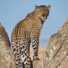 Tanzania Serengeti Safari Overview
