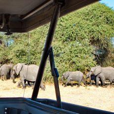 Wildlife of Tarangire National Park