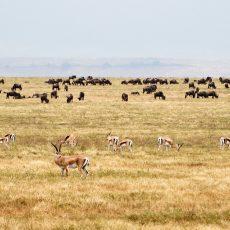 Wildlife of Ngorongoro Crater