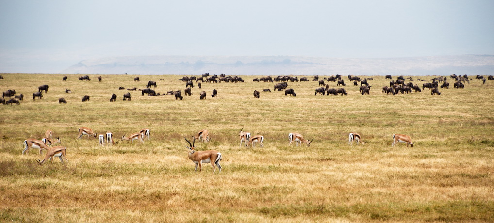 Wildlife of Ngorongoro Crater
