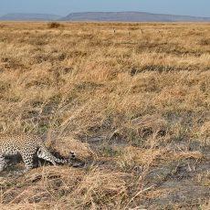 Wildlife of Serengeti National Park