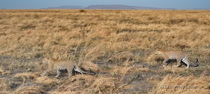 Wildlife of Serengeti National Park